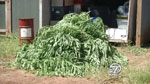 Subject of marijuana raid sues Shasta County
